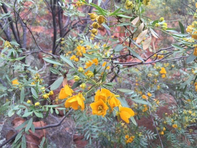 yellow flowers Durba