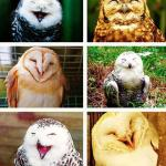 Owls Having a Hoot