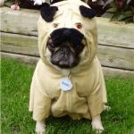 12 Ingenious Pet Costumes