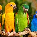 Animals – 15 Bizarre Collective Nouns