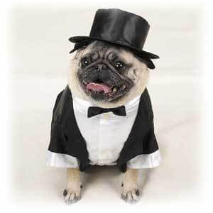 Dog in suit