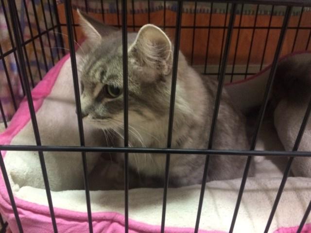 pet-adoption-taking-her-home