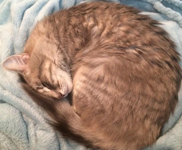 pet-adoption-comfy-at-home