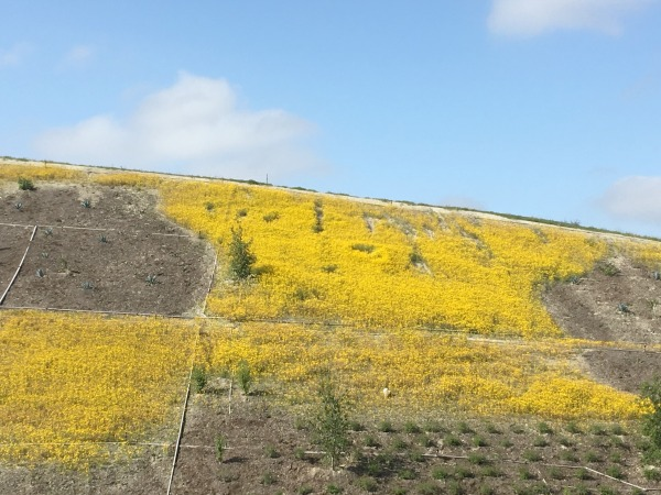 road-trip-tips-yellow-flowers