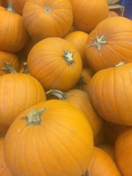 irvine-park-railroad-pumpkin-patch