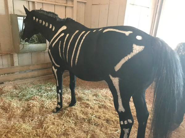 knotts-spooky-farm-livery-stable-horses