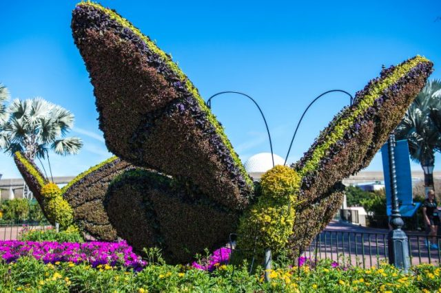 epcot-flower-and-garden-festival-butterfly-topiary