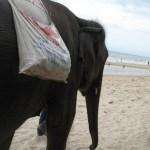olifant op het strand