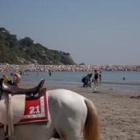 takiab beach strand paard