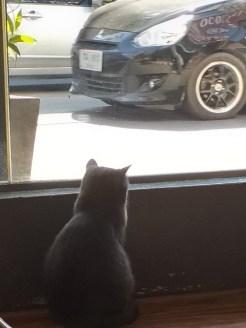 kat wil auto