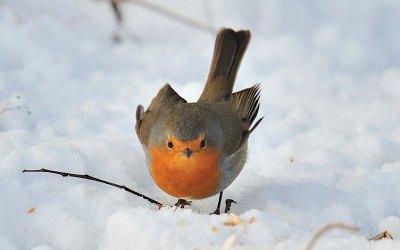 Die richtige Winterfütterung von Wildvögeln