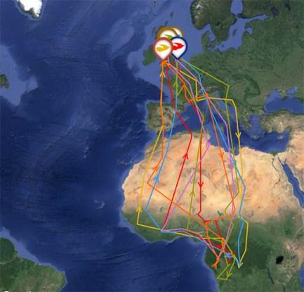 GPS verfolgten Kuckucks Stand 3 Juni 2016