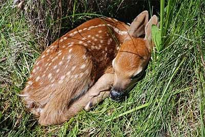 deer01_400