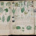 O manuscrito mais misterioso do mundo poderá ser decifrado 1