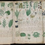 O manuscrito de Voynich contém uma mensagem genuína, alega pesquisador 8