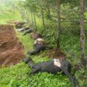 Alegado ataque de Chupacabras no agreste alagoano - Brasil 7