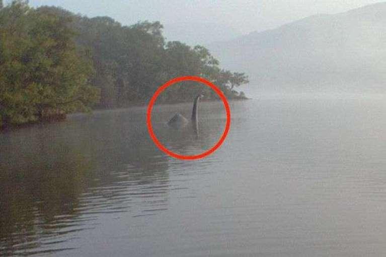 """Investigador diz que monstro do Lago Ness """"parece com a baleia extinta"""""""