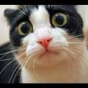 Exclusivo: Gato é abduzido por OVNI! 17