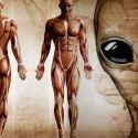 Humanos não evoluíram na Terra, conclui cientista 32