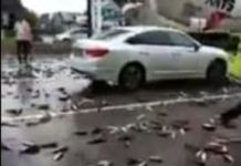 chuva de peixes