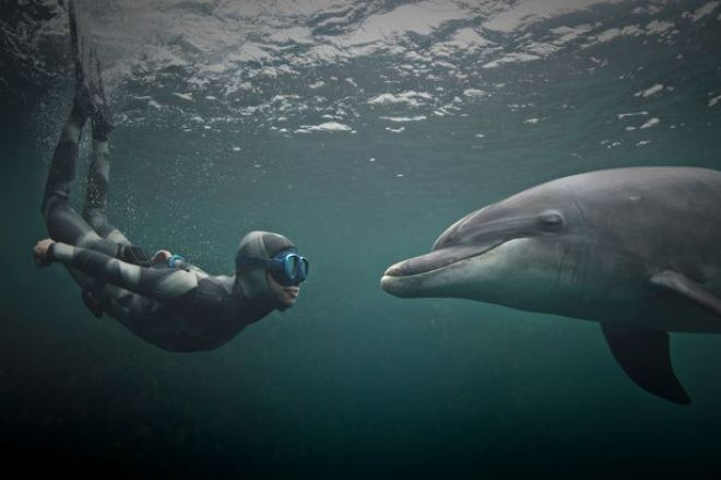 NASA financiou experimentos para comunicação com ETs, usando LSD e sexo com golfinhos