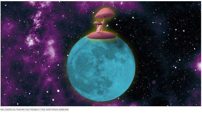 NASA quer construir bases na Lua e em Marte com cogumelos