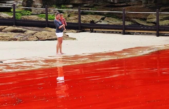 Praias, lagoas e rios ficam vermelhos ao redor do mundo
