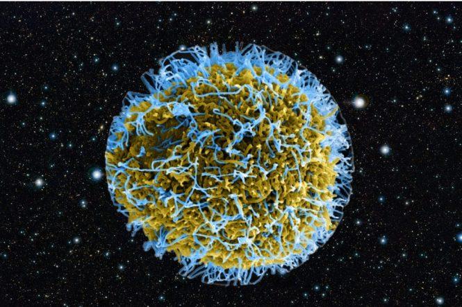 Cientistas estão procurando por vírus extraterrestres