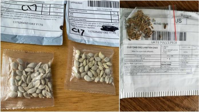 Mistério das sementes que não foram encomendadas pode ter sido resolvido