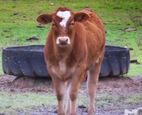 A profecia das 7 vacas: Um colapso do mercado ou uma guerra nuclear?