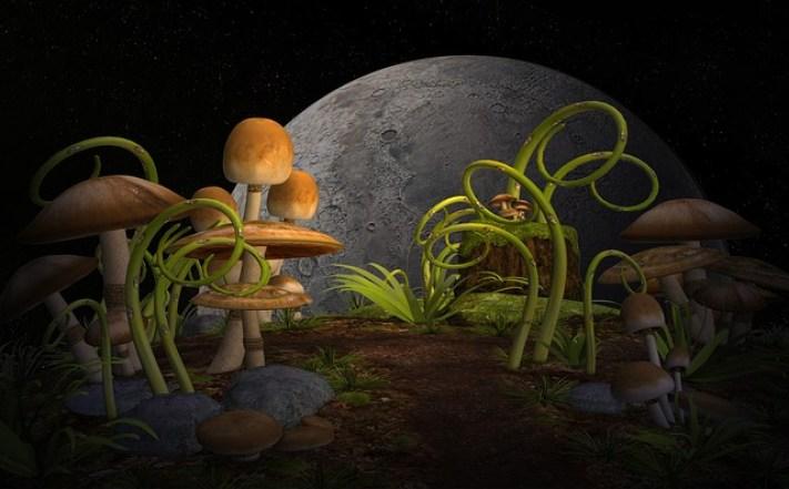 Fungos serão encontrados em outros planetas, afirma especialista