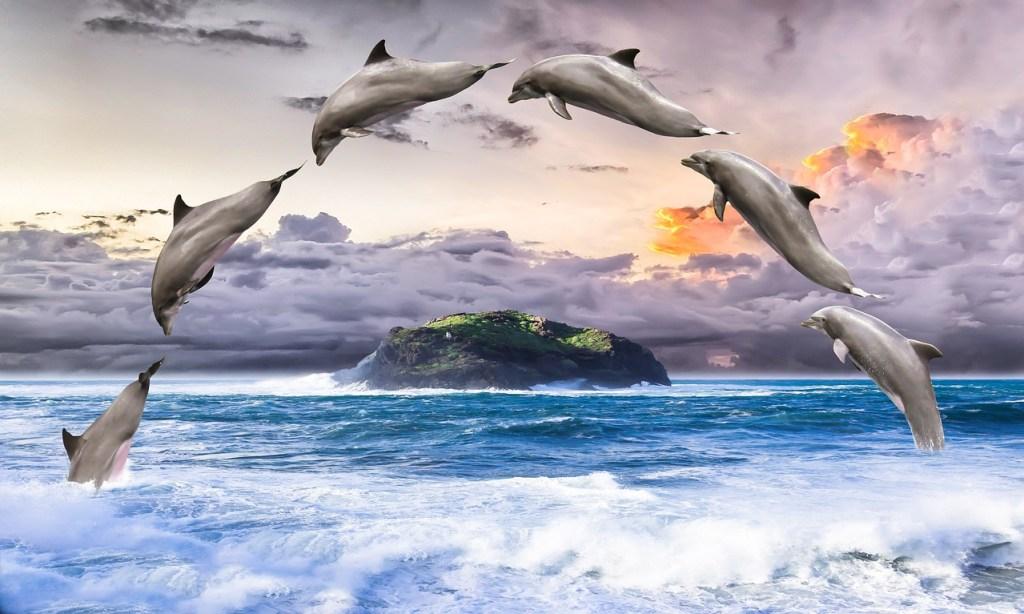 Esqueça os ETs! E se os OVNIs forem pilotados por golfinhos?