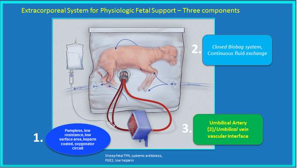 utero artificial 1