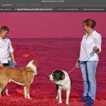 Photoshop hará más sencillo seleccionar personas gracias a inteligencia artificial