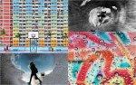 Las 10 mejores fotos sacadas con iPhone: Apple eligió a los ganadores del concurso Shot on iPhone