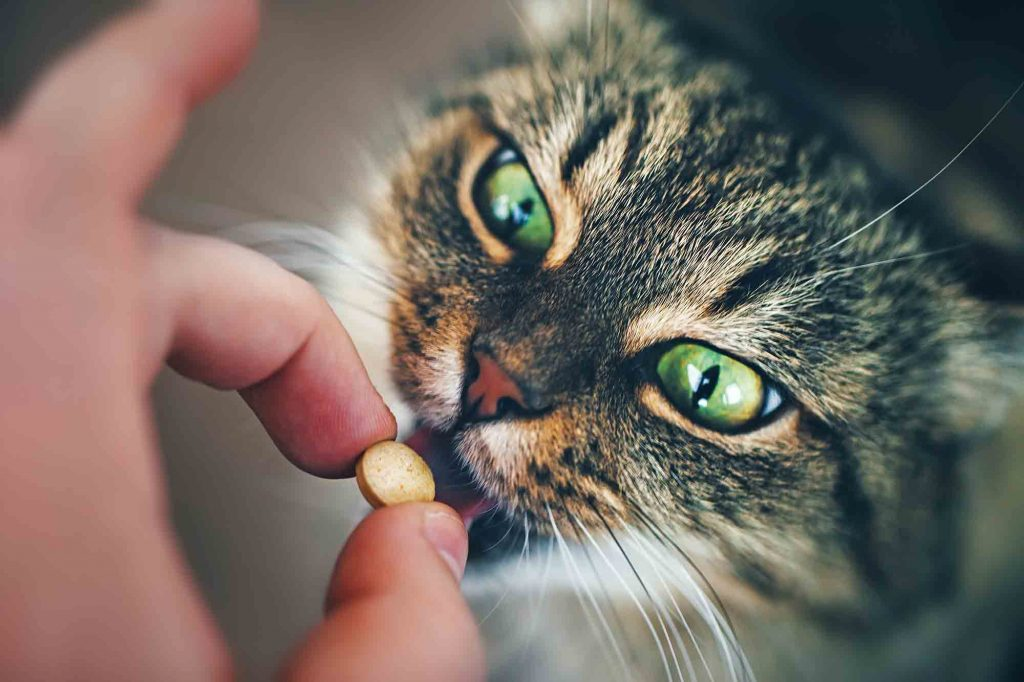 Image result for Pet pill pockets istock