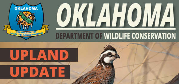 Quail Ecology and Management Project Report for April 2021