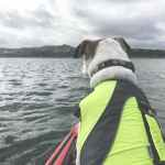 Have you ever wanted to try kayaking with your dog? Learn all the things you need and steps to take to make it a successful kayaking trip with your dog! - oweittospaghetti.com