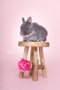 Owiwi konijnen fotografie