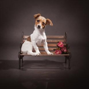 Puppy bankje Owiwi