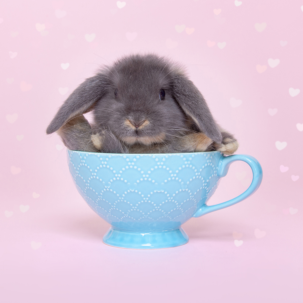 Bunny Kopje Owiwi