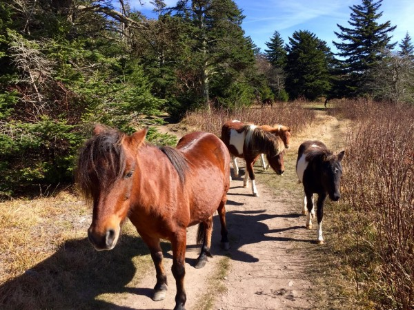 On the way back down: more ponies! This never gets old.