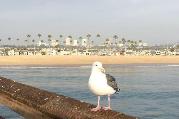 Beautiful Balboa