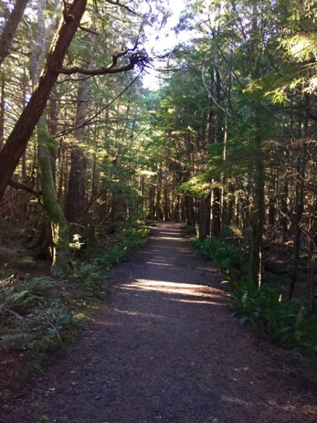 Next several shots: scenes from our hike along the Cape Flattery Trail. It's only 3/4 mile, but oh, where it took us!