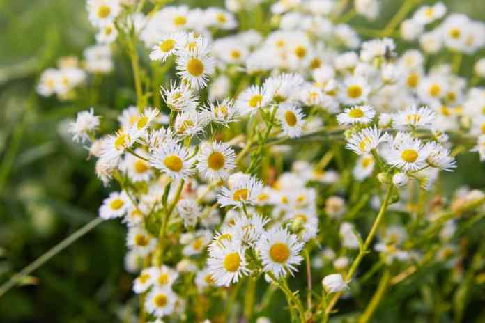 Plants that Repel Ticks: Top 10 Picks and Tricks! 2019: Own The Yard 6