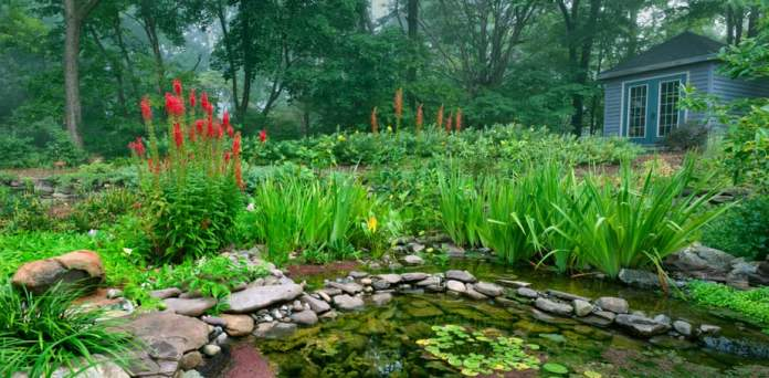 Best Plants for Water Gardens (+ Images to Spark Ideas!) 2019 28