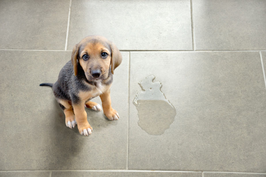 how to clean dog urine from a concrete