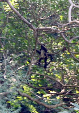 0172_SanCristobal_CanonDeSumidero_Wer-beobachtet-wen-der-Affe-uns-oder-wir-ihn