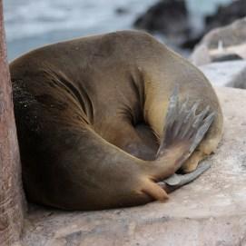 Galápagos, Santa Fe: Macht mal jemand das Licht aus, ich möchte schlafen