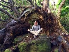 Coromandel, Cathedral Cove Trail: Eine Landschaft wie aus Herr der Ringe